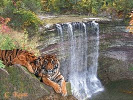 Ballsfalls Tigers by orionshope