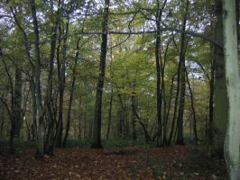 The wood Oteppe 2 by carinaD-stock