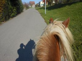 horse stock - from the back of a horse by StockYourLive