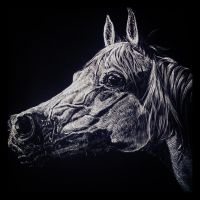 Horse by qunick
