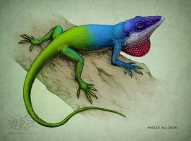 Anolis allisoni by jrtracey