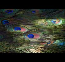 Tail Feathers by Vividlight