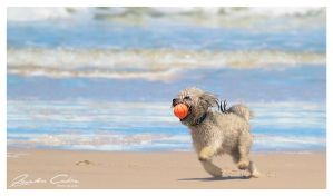 pooch and Ball Gold Coast 2 by jaydoncabe