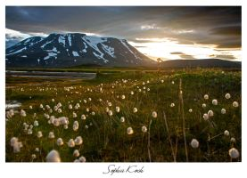 Midnight sun by Soffeline