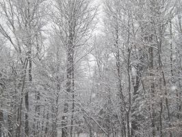 Winter's Forest by lilmissa103