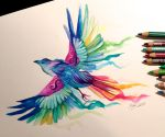 Day 23- Rainbow Bird by Lucky978