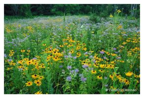 Evening in a Summer Meadow by tditzgb