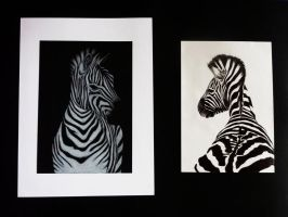 Zebras by JustABeautifulDream