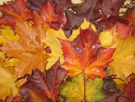 Autumn leaves by RitaFromRussia