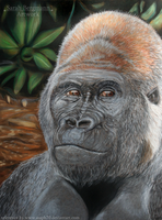 Gorilla - Pastel portrait by BLACKNIGHTINGALE81