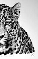 Half series-Amur Leopard by salt25