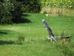 Heron by tryskell