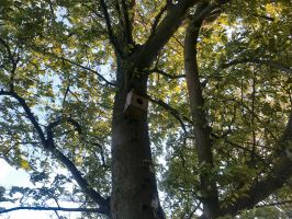 The Trees and Me - Garden - 2012-29.2 by Kay-March