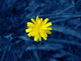 Yellow and blue by Sandien