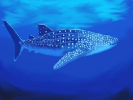 Whale Shark for DavidFolkie by Spidergirl79