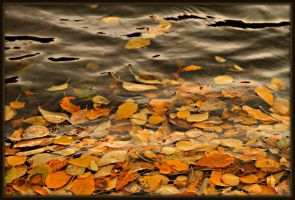 fall in the water.. by candysamuels