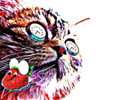 Psychedelic Kitty by mkdsingergirl