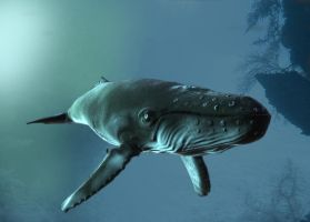Whale rendering by R0mainR
