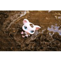 Happy As A Pig In poo by tracieteephotography