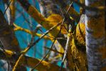 Lichens by Sparty91