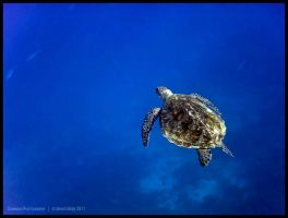 Green turtle 7 by Dominion-Photography