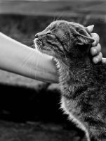 love my cat bw by erinche