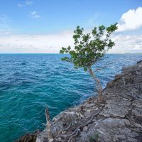 Caribbean tree by peterpateman