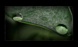 Two Drops On a Dusty Leaf by Mizth