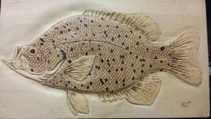 Black crappie Woodburned relief carving by BradicalEYE