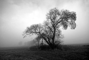 lonesome by augenweide
