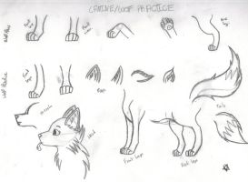 Canine/Wolf Sketches/Practice by SweetAutumnxPup