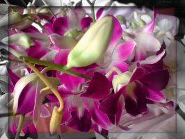 Orchids -II by sharan