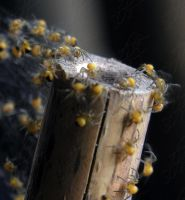 Baby Spiders by pjropes
