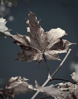 Leaf in a different light by SallokcaB