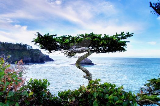 Cape Flattery by Navt