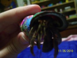 Fred the Hermit Crab by ImHappy4ever