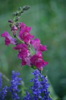 Flowers in the garden... by XpressivePhotography