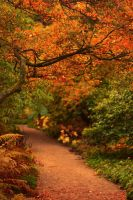 Autumn in Northumberland 2 by newcastlemale