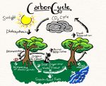 Carbon Cycle by Annanimus