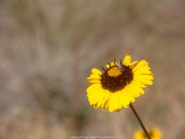 Sunflower And Bug by jacksonywl