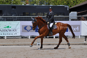Show Jumping Stock 020 by Champi-Stock