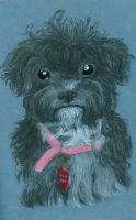 Yorkipoo Mixed Media by RainbowKigerMustang