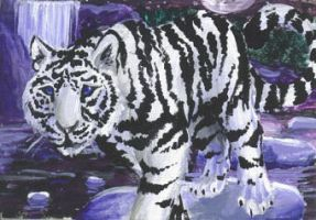 ACEO - White Tiger by Snapdragoon