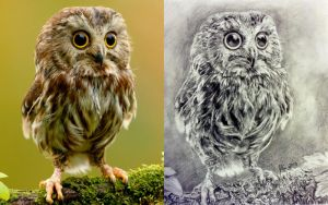 Owl comparison by silicon-jayce