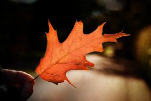 .:.First Autumn Leaf.:. by Ailedda