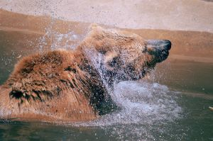 toronto zoo - bear bath time by Noise-Less