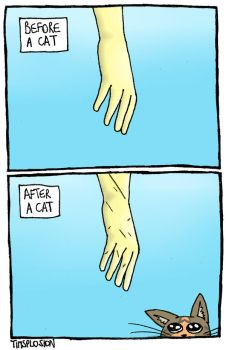 Cats: Before and After by timsplosion