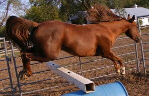 Allie Jumping by mistyofmyheart