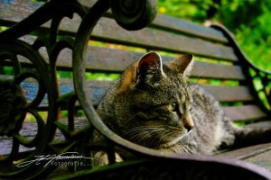 waiting... by extraneous24