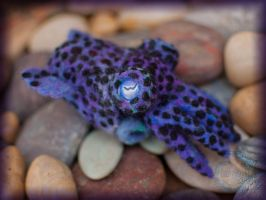 Needle-felted Bobtail Squid by crocodiledreams